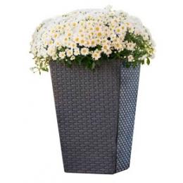 Горшок для цветов Keter Rattan M